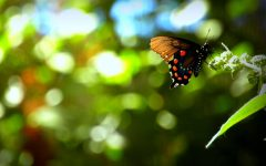 The Butterfly Effect [Video]