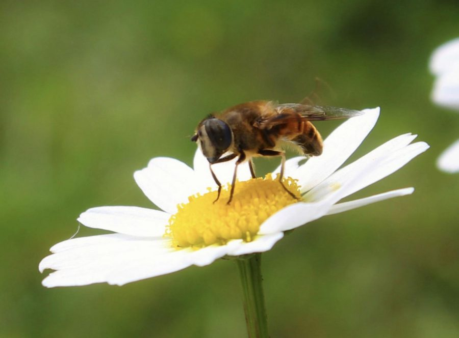 The truth about the birds and the bees