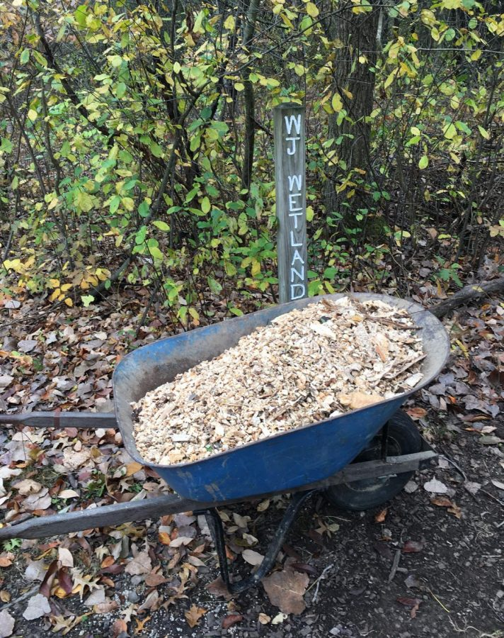 A wheelbarrow of the mulch used to cover the path at the entrance of the wetlands' trail.
